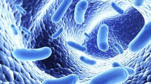 Lợi khuẩn Bifido là chìa khóa giúp điều trị bệnh viêm đại tràng lâu năm.