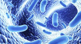 Điều trị bệnh viêm đại tràng bằng vi lợi khuẩn
