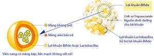 Lợi khuẩn có màng kép trong cách chữa viêm đại tràng.