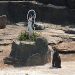 """Chú chim cánh cụt bỗng nổi tiếng vì """"phải lòng"""" nhân vật hoạt hình"""