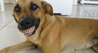 Chú chó bỗng nổi tiếng vì mang hàm răng người