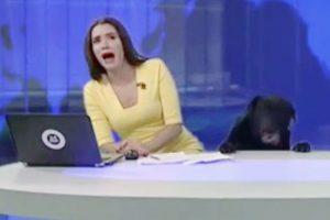"""Hài hước chú chó xuất hiện bất ngờ """"làm loạn"""" bản tin thời sự"""
