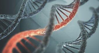Đã phát hiện ra loại gen mới giúp điều trị gan nhiễm mỡ hiệu quả