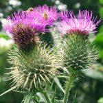 Hỗ trợ điều trị ung thư gan bằng Đông y hiệu quả với thảo dược quý