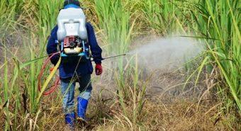 Hoạt chất trong thuốc diệt cỏ có gây ung thư không?