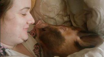 Ngủ với lợn, đôi vợ chồng dùng cả mặt nạ phòng độc trong nhà
