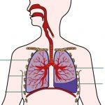 Tại sao bị tràn dịch màng phổi?