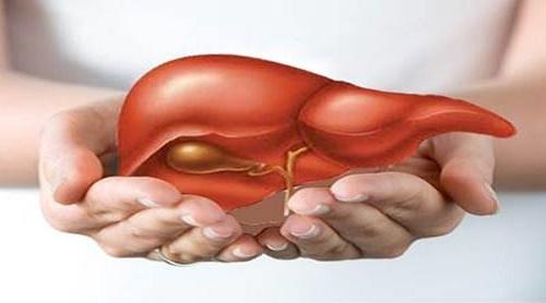 Sử dụng nấm lim xanh để điều trị viêm gan B, C hiệu quả