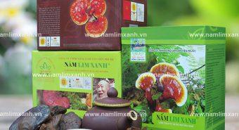 Nấm lim xanh tự nhiên có giá bán tiền triệu cho 1kg nấm lim rừng