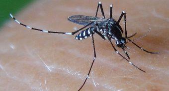 Loại bỏ muỗi truyền bệnh sốt xuất huyết ngay trong nhà