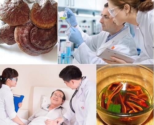 Nấm lim chữa ung thư phổi cho người bệnh