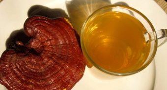 Nấm lim xanh Tiên Phước có tác dụng gì trong việc đẩy lùi mỡ máu?