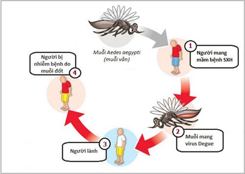 Con đường lây truyền bệnh sốt xuất huyết