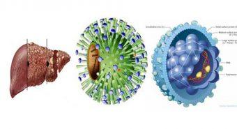 Tìm hiểu nguyên nhân gây bệnh viêm gan B