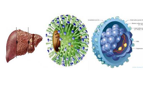 Nguyên nhân gây bệnh viêm gan b là gì?