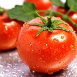 Có thể chống lại ung thư da bằng cách ăn cà chua hằng ngày
