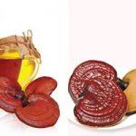 Cách dùng nấm lim trị bệnh hiệu quả. Tác dụng rượu nấm lim xanh