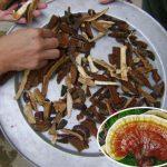 Cách sơ chế nấm lim xanh loại bỏ độc tố. Tác dụng phụ của nấm lim rừng