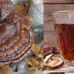 Cách sử dụng nấm lim xanh rừng: Sắc uống, hãm trà, ngâm rượu