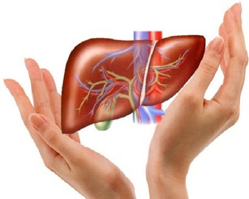Xạ đen hỗ trợ điều trị bệnh gan hiệu quả