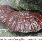 Giá nấm lim xanh Quảng Nam bao nhiêu 1kg? Nơi mua bán nấm lim