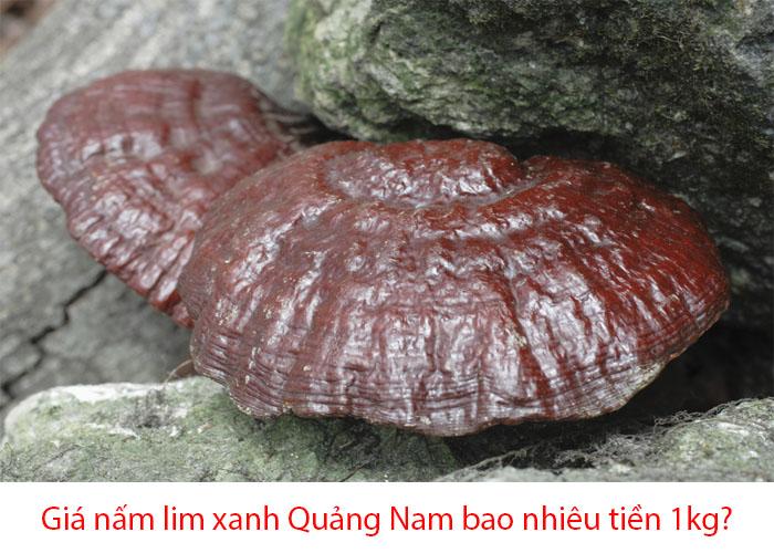 Giá nấm lim xanh Quảng Nam được nhiều người mua thắc mắc