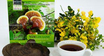 Giá nấm lim xanh tự nhiên - Địa chỉ bán nấm lim rừng tại Hà Nội