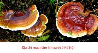 Mua nấm lim xanh ở Hà Nội: Địa chỉ mua bán nấm lim rừng Quảng Nam