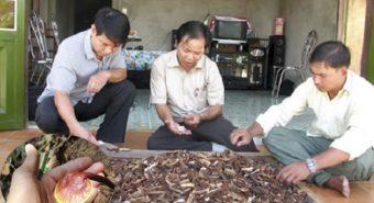 Nấm lim xanh của Nguyễn Đình Hoa là nấm gì và nguy hiểm như thế nào?