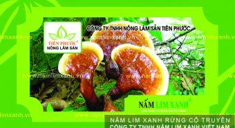 Nấm lim xanh giá bao nhiêu tiền 1kg và mua nấm lim rừng ở đâu?