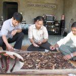 Nấm lim xanh Nguyễn Đình Hoa có nguy hiểm không? Tác hại của nấm giả