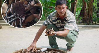 Nguyễn Đình Hoa nấm lim xanh: Sự thật về nấm lim xanh rừng