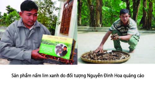 Nấm lim xanh Nguyễn Đình Hoa có tốt như lời đồn không?