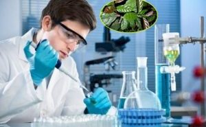 Lá cây xạ đen có tác dụng chữa bệnh gì? Sử dụng lá xạ đen thế nào?
