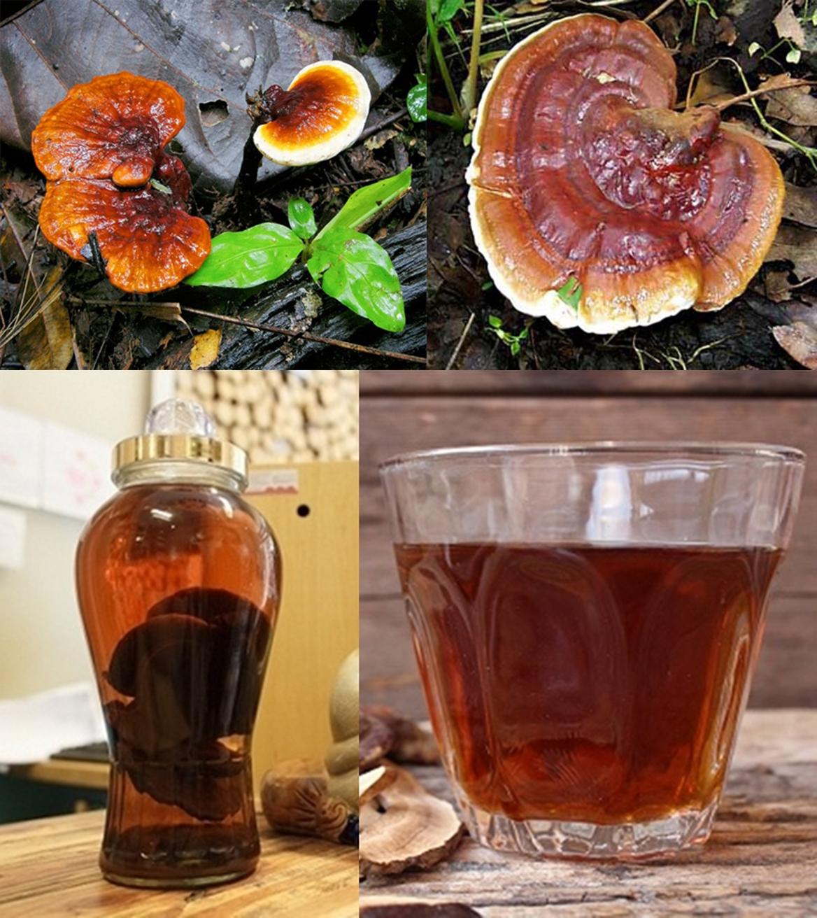 Rượu ngâm nấm lim xanh là một trong những loại rượu có tác dụng bồi bổ, phòng ngừa bệnh tật.