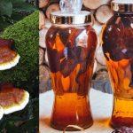 Rượu ngâm nấm lim xanh tác dụng gì cách uống rượu nấm lim rừng