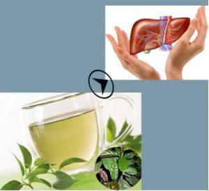 Sử dụng lá cây xạ đen chữa bệnh gan hiệu quả.