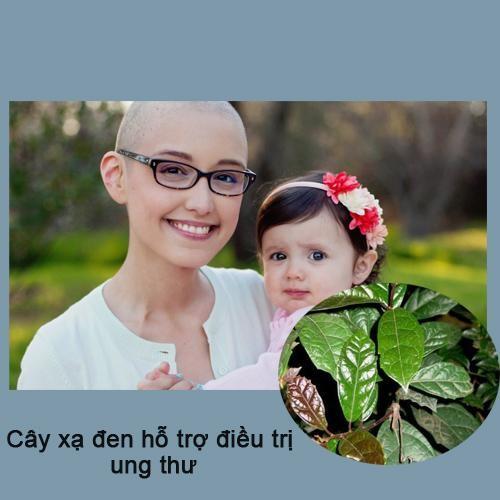 Cách dùng lá xạ đen tươi chữa bệnh ung thư cực tốt.
