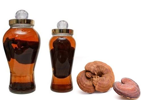 Nên dùng nấm lim ngâm rượu theo liều lượng quy định