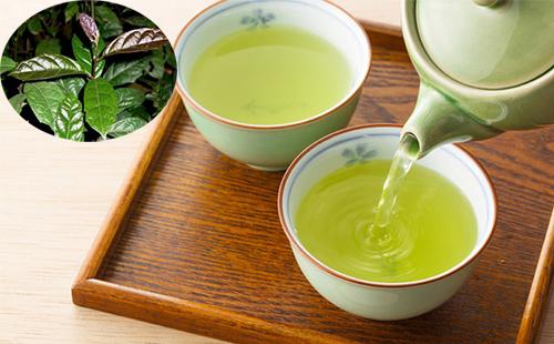 Tác dụng trà xạ đen giúp thanh lọc, giải độc cơ thể