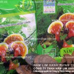 Công dụng chữa bệnh của nấm lim xanh và nấm lim rừng trị ung thư?