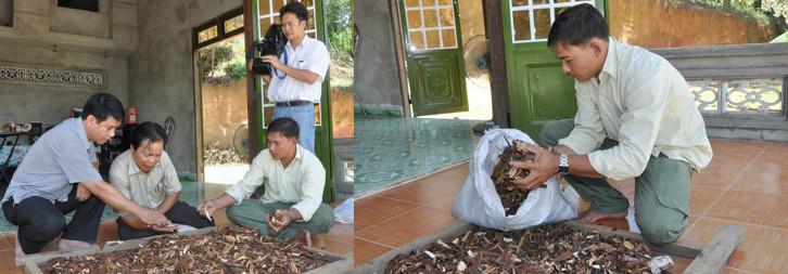 Công ty nấm lim xanh Nguyễn Đình Hoa bị nghi ngờ bán nấm không rõ nguồn gốc