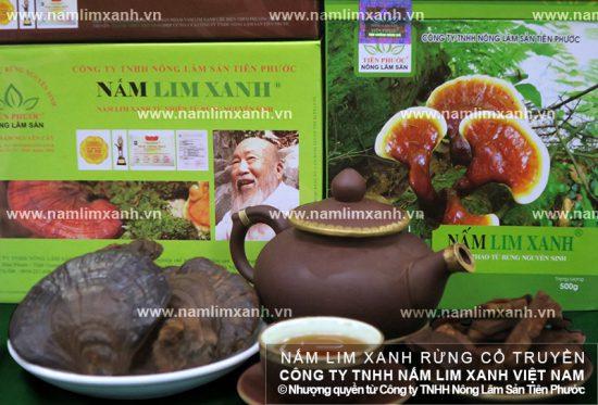Tác dụng của cây nấm lim xanh chữa bệnh ung thư và các nhóm bệnh khác