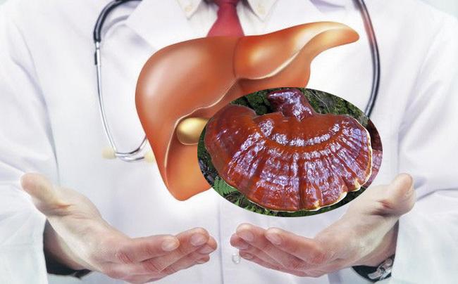 Nấm lim xanh điều trị bệnh gan vô cùng hiệu quả