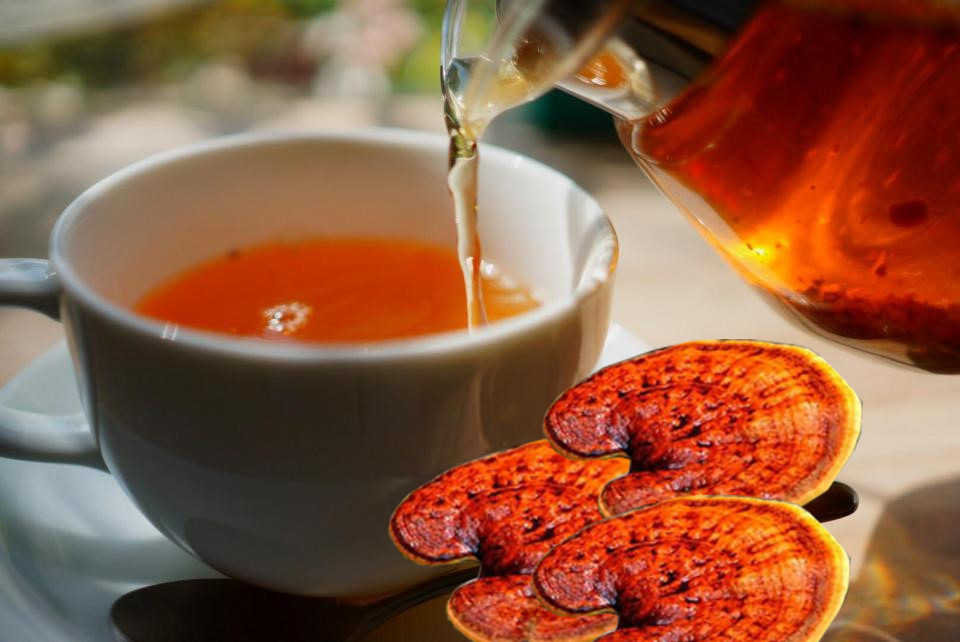 Sử dụng nấm lim xanh hãm trà uống hàng ngày đem lại lợi ích đối với sức khỏe
