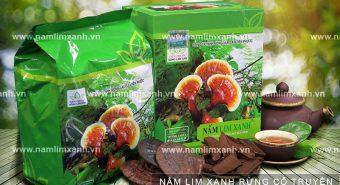 Tác dụng của cây nấm lim xanh cách sử dụng nấm lim xanh an toàn