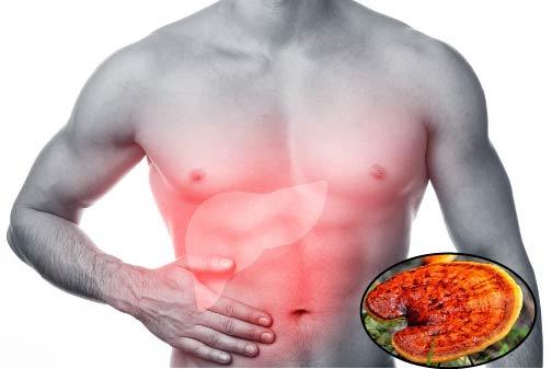 Tác dụng của nấm lim xanh đối với bệnh gan là gì?