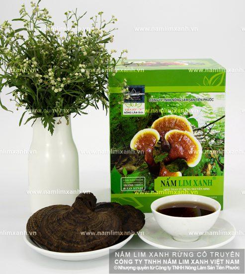 Tác dụng nấm lim xanh Quảng Nam trong điều trị bệnh
