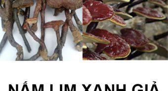 Tác hại của nấm lim giả hướng dẫn chọn mua nấm lim xanh rừng thật
