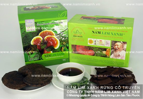 Thành phần dược chất của nấm lim rừng tự nhiên